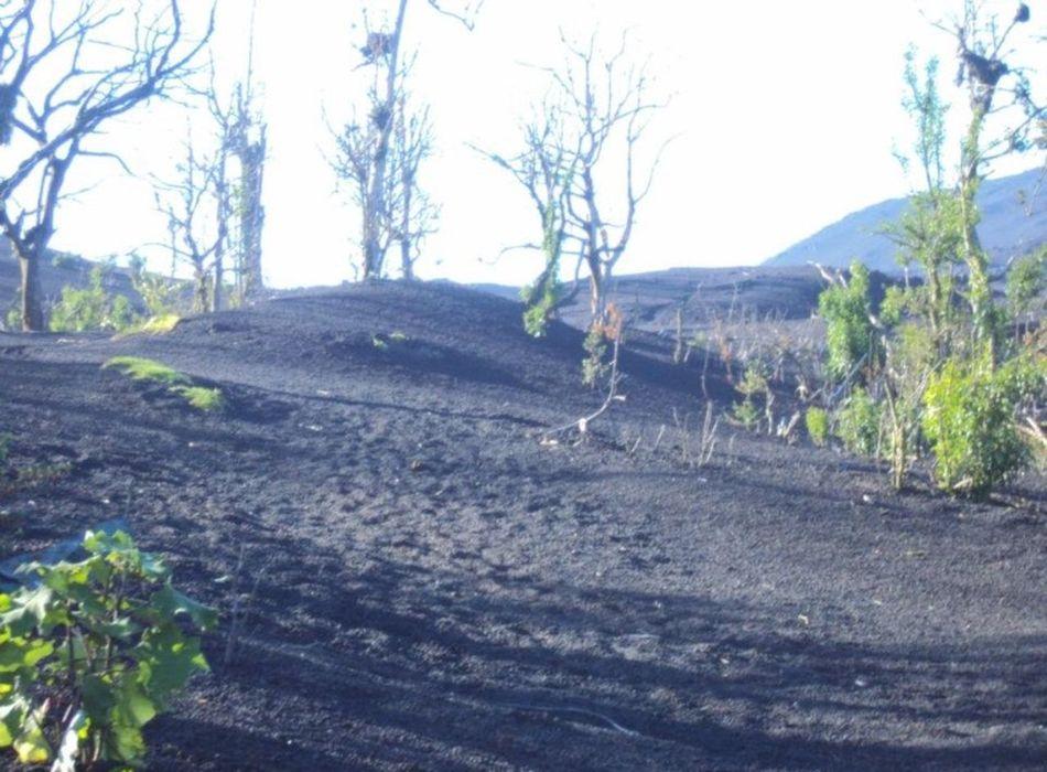 Majestic Nature Mother Nature Mountain View Outdoors San Vicente De Pacaya,Guatemala Scienceworld Volcano Volcano Eruption