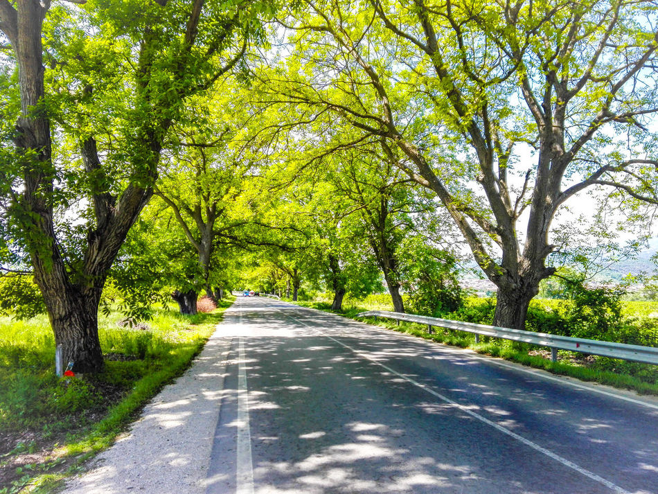 Colour Of Life Roud Trees Tunnel Of Trees My Favorite Place Tree_collection  Roud In Heaven