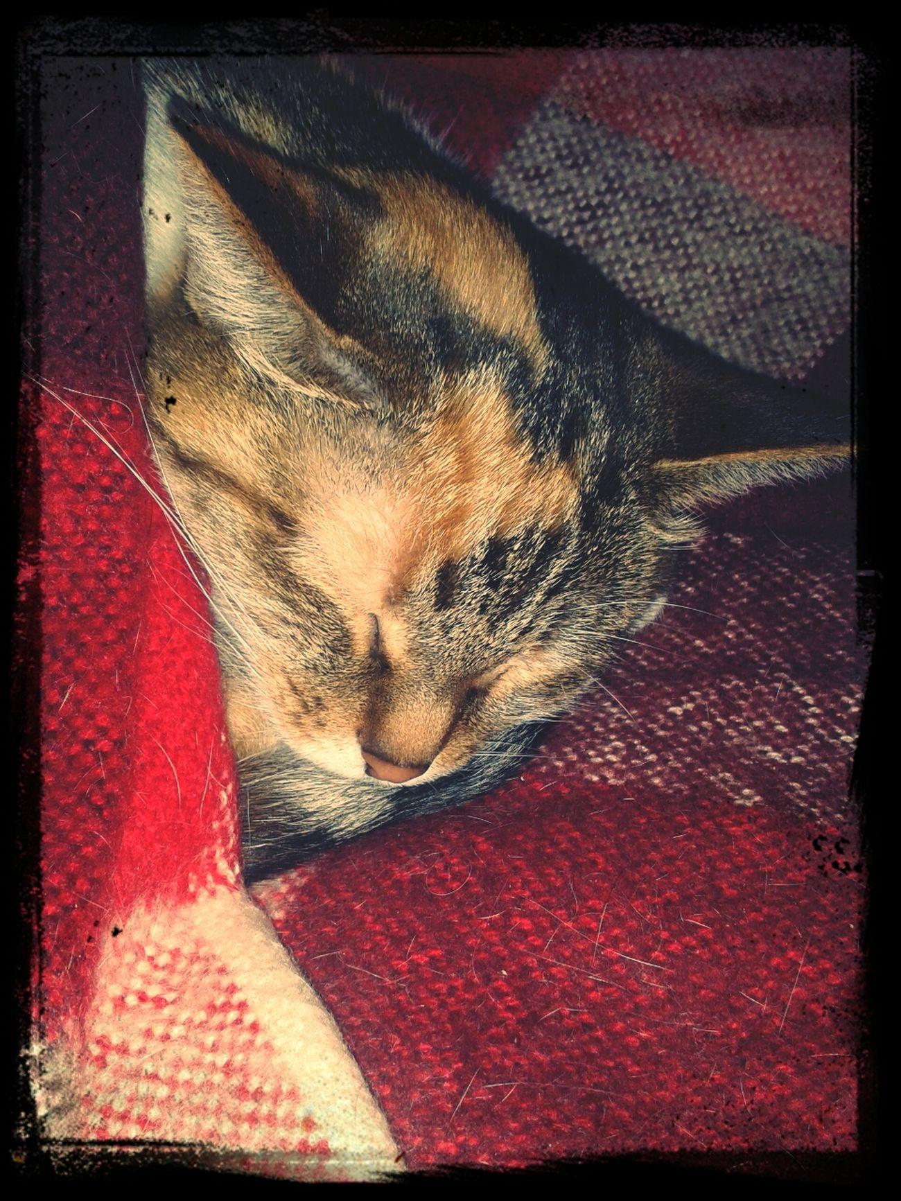 Холодно сон холод кошка First Eyeem Photo