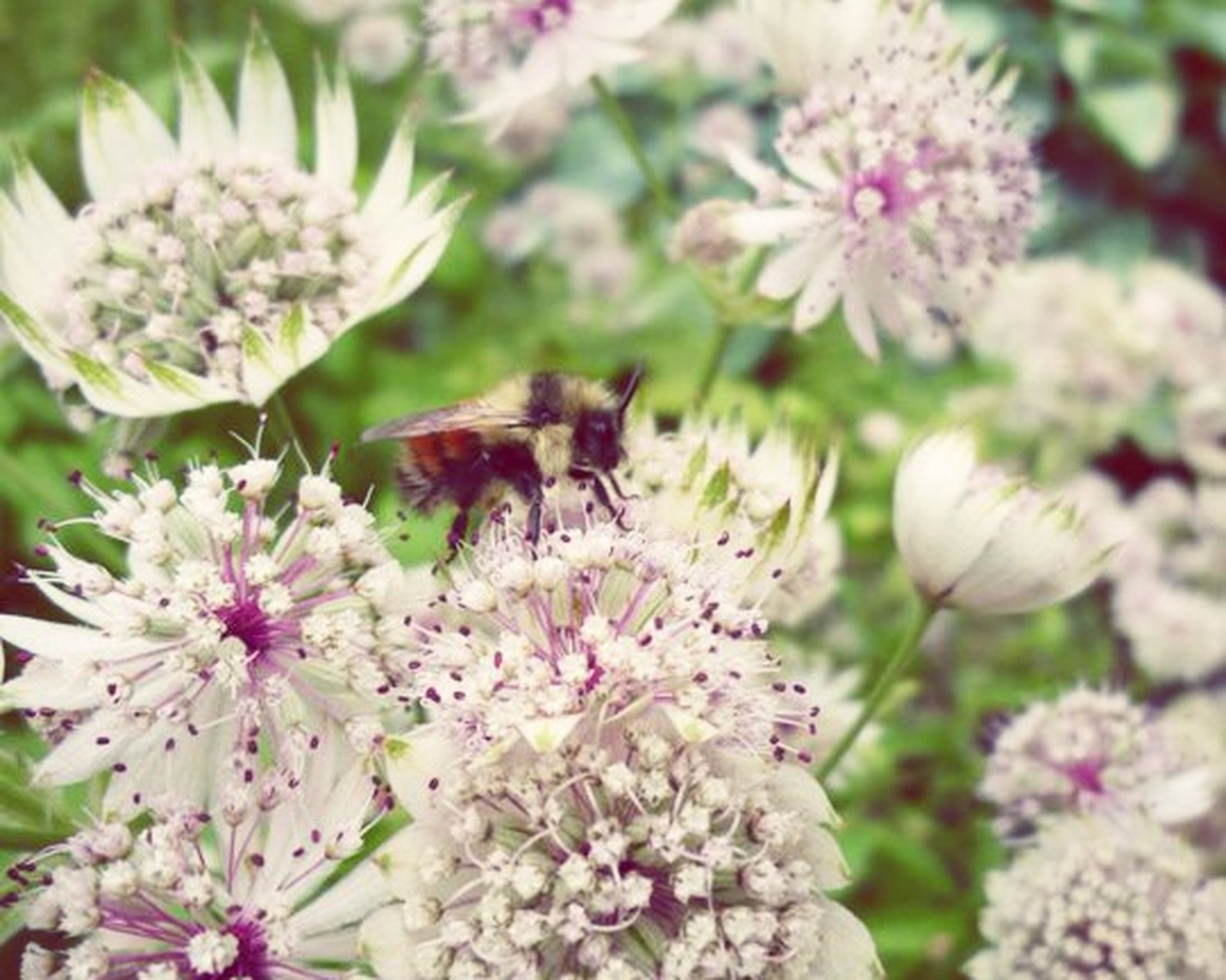 flower, freshness, fragility, petal, beauty in nature, growth, flower head, nature, animals in the wild, insect, close-up, animal themes, one animal, wildlife, focus on foreground, blooming, white color, blossom, in bloom, plant