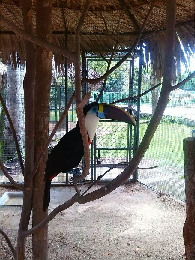Taking Photos Animal Posing Animal Animal_collection Animal Photography Zoo Tucan Zoo Animals