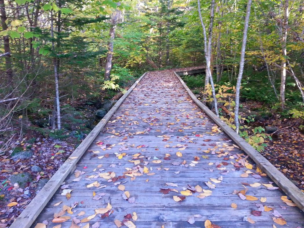 My walk home. Relaxing Woods Wooded Area Trees Taking Photos Nature Fall Beauty Autumn Colours Tranquility Autumn