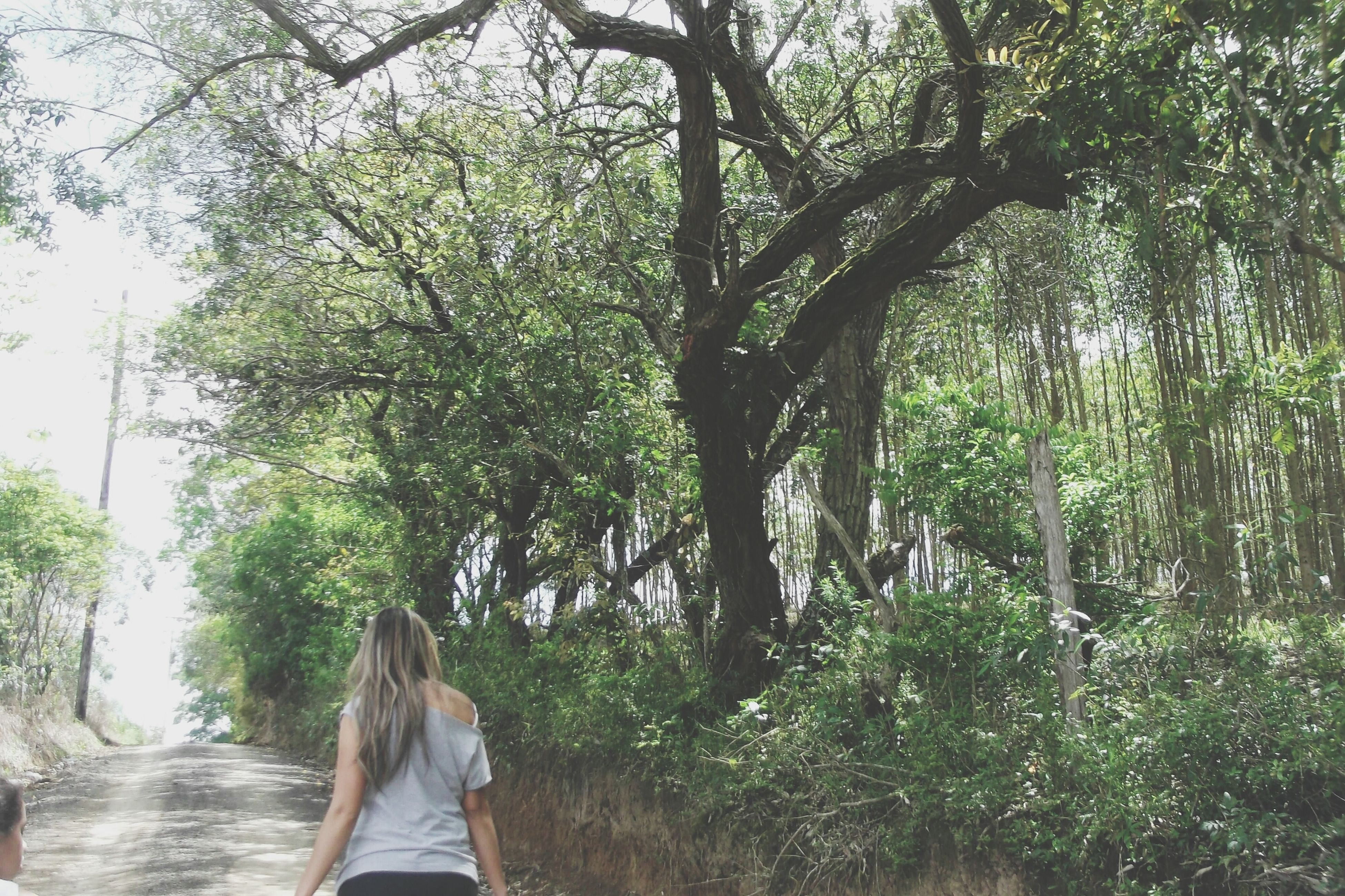 tree, lifestyles, growth, leisure activity, rear view, tree trunk, branch, standing, person, casual clothing, men, nature, day, park - man made space, green color, walking, full length, sunlight