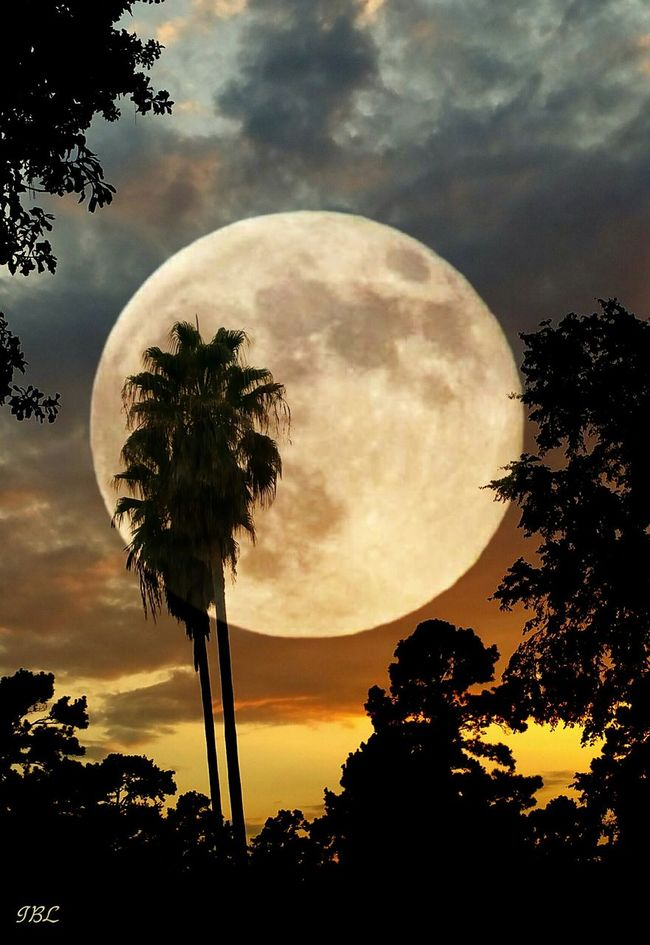 This was the sunset last night. Added the moon of course The Magic Mission Edited Add A Photo Silhouette Sunset Sky Beauty In Nature Nature Scenics Majestic Cloud - Sky Gold Moon Eyemphotos Full Moon Night Popular Photos Onmystreet Double Exposure Palm Trees