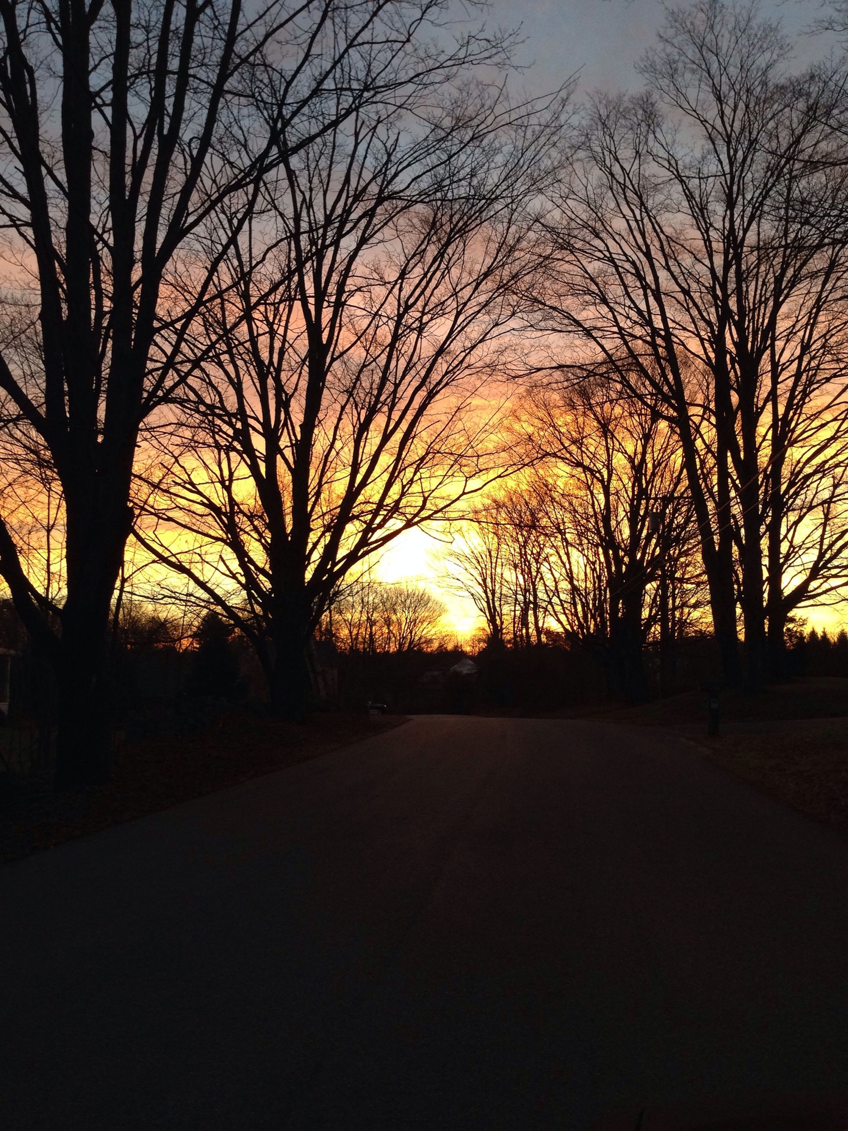 sunset, bare tree, silhouette, tree, the way forward, tranquility, orange color, tranquil scene, road, sky, scenics, branch, beauty in nature, nature, sun, diminishing perspective, transportation, vanishing point, landscape, outdoors