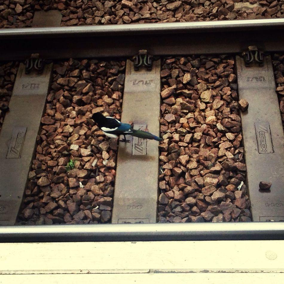 EyeEm Birds Train Station nature_collection