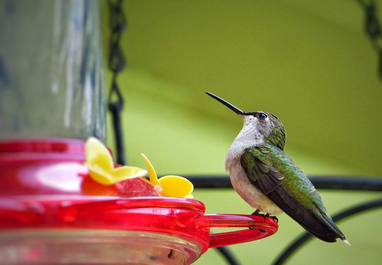 How great thou art~ Hummingbird Birds Bird Bird Photography Nature Nature_collection EyeEm Nature Lover EyeEm Best Shots The Great Outdoors - 2015 EyeEm Awards The Moment - 2015 EyeEm Awards