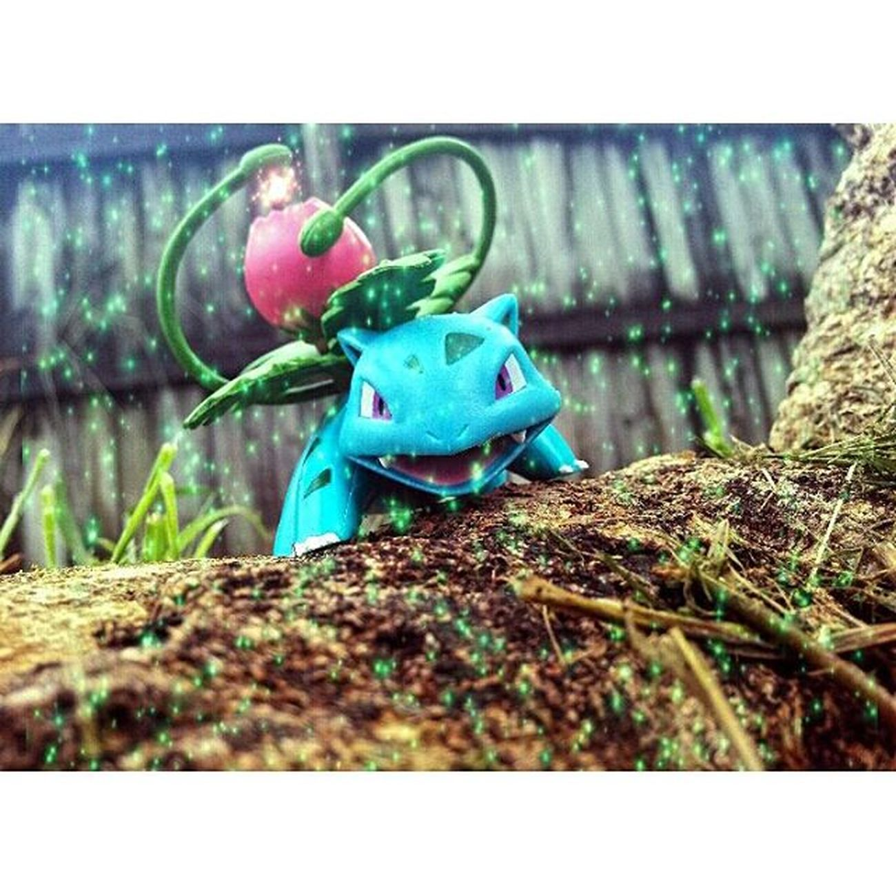 PokéJournal Entry No. 606: Ivysaur are known for being the most aggressive in the Bulbasaur evolutionary line. In battle it is not uncommon for Ivysaur to ready three attacks simultaneously in order to ensure its victory. Posableplanet Posableplanetpresents Ata_dreadnoughts Anarchyalliance Toyboners Toyoutsiders Toydiscovery Epictoyart RS_Toyshotz Toyslagram Toypops2 Toyplanet Toypizza Pokémon Pocketmonsters Pikachu Anime Manga Toycrewbuddies Toycommunity Toyphotography Zifu_toys Toysphotogram nerdshit nogods_justmonsters justanothertoygroup