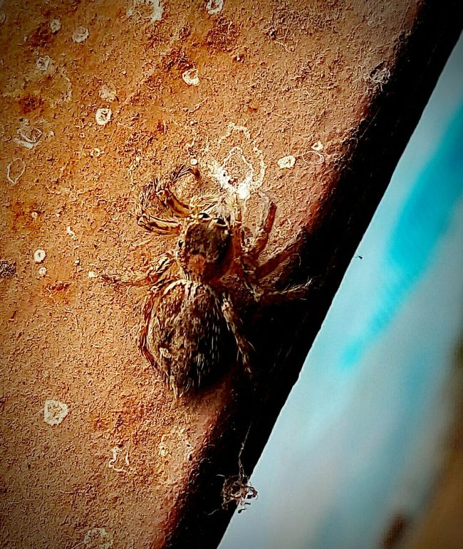 Itsy Bitsy Spider Spider Venomous Beautiful Nature Photography Nature Photography Best  First Eyeem Photo Birds Of EyeEm  Hello World Nature_collection 2016 Relaxing Day Photo Colorful Check This Out Click New On Eyeem EyeEm Best Shots Hi World Bestoftheday