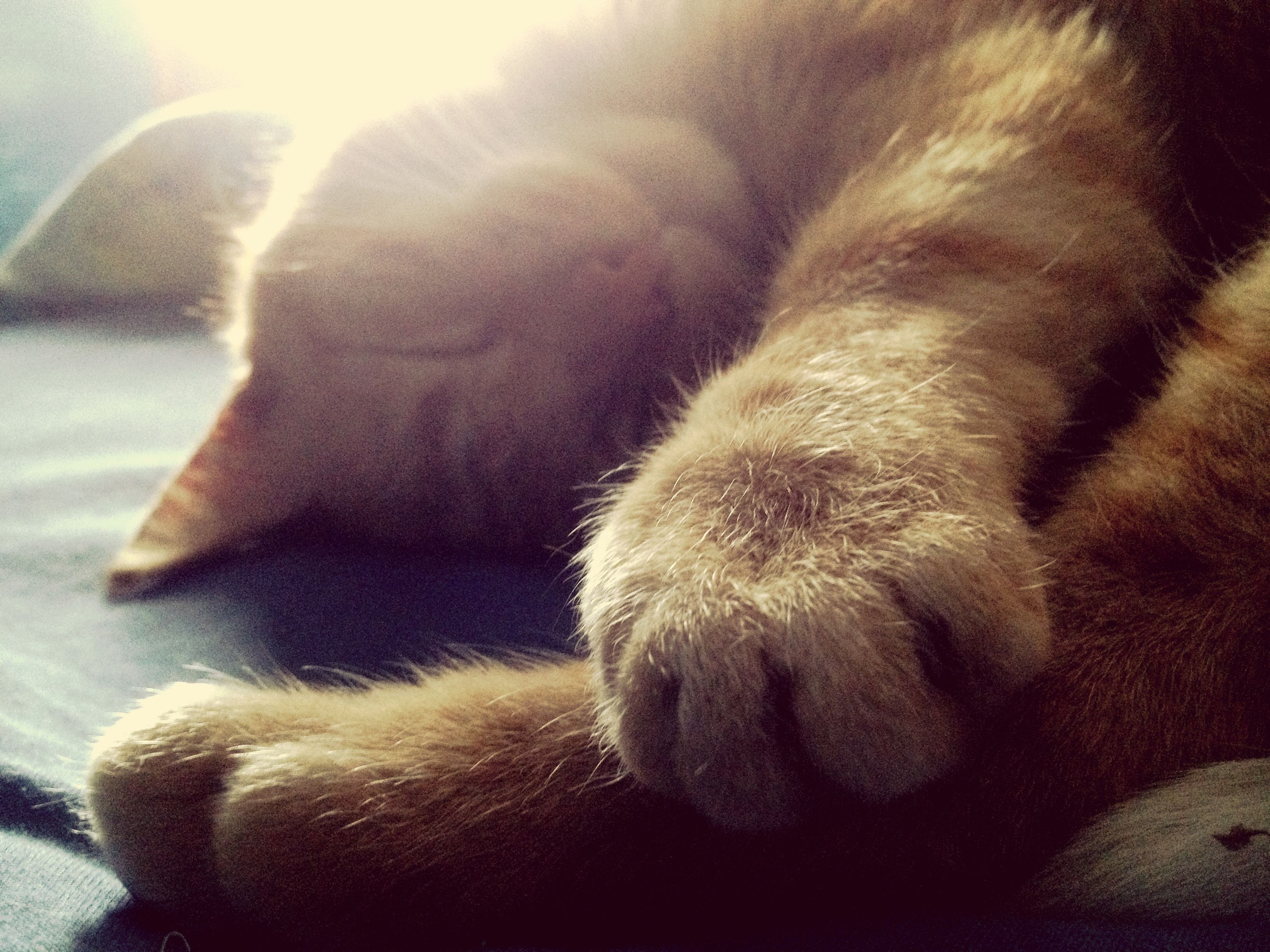 My too cute cat sleeping 😍😘