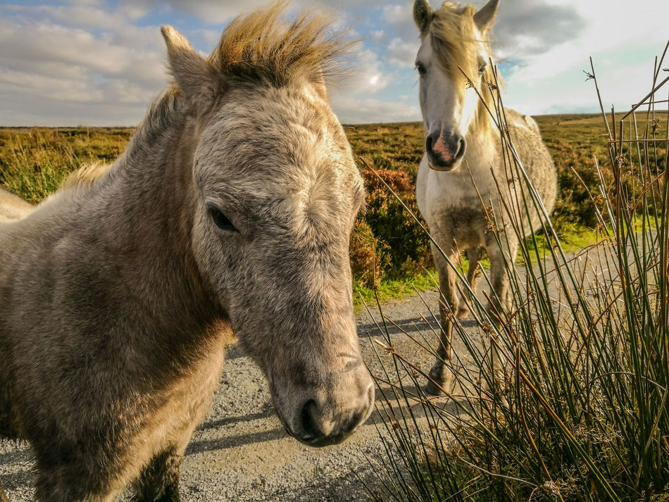 Wild Ponies Animal Themes Sunlight Mammal Day Outdoors No People Animals In The Wild Nature Safari Animals Domestic Animals Sky Donkey