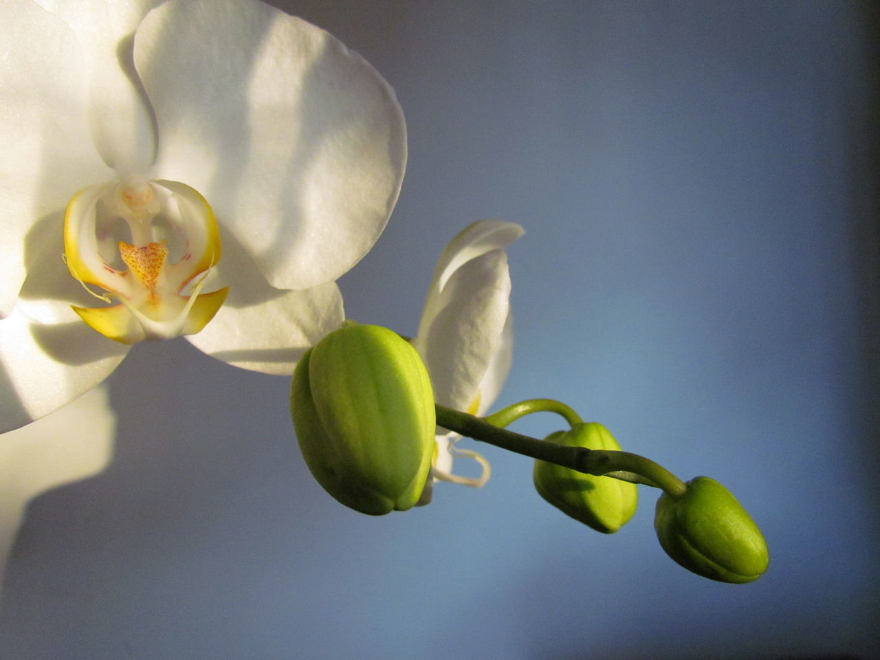 Flower Growth Fragility Nature Yellow Beauty In Nature Close-up Freshness No People Flower Head Outdoors Day Orchids Collection Beauty In Nature Photography Orchids EyeEm Gallery Phalaenopsis Orchid Petal Brazil Kikosene EyeEm EyeEm Gallery Nature_collection Nature