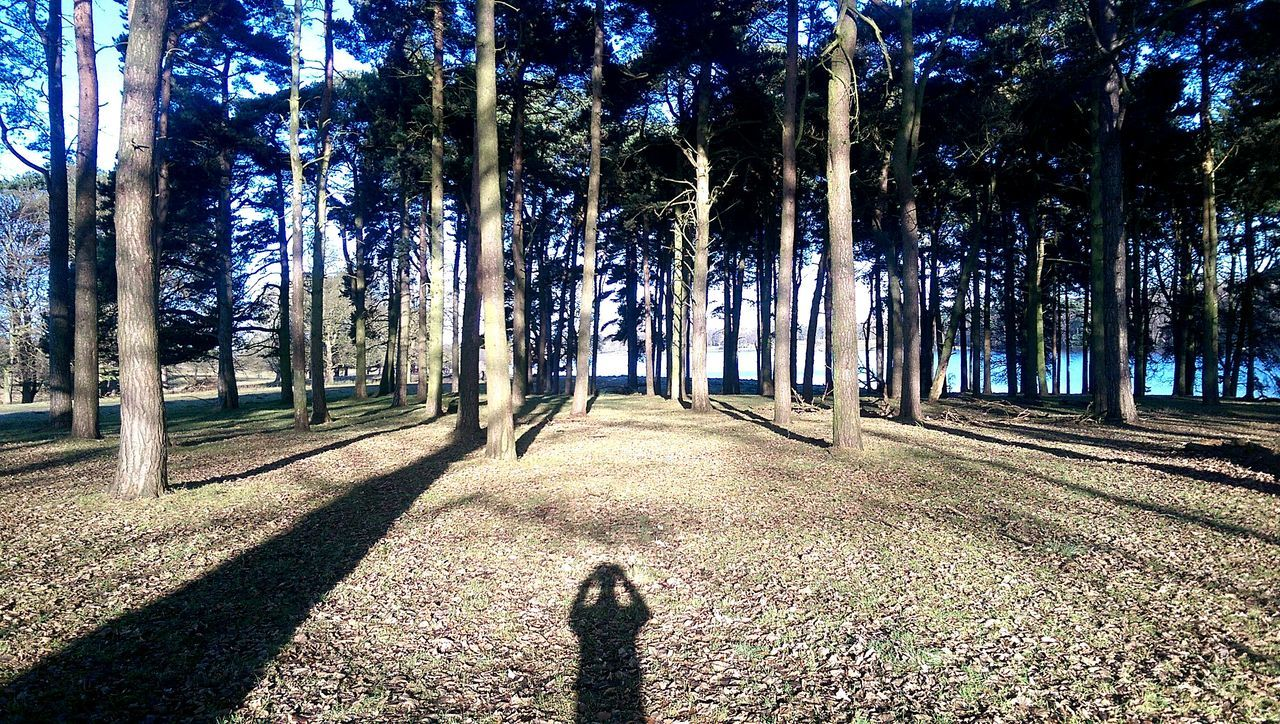 Tatton Park, January 2017 January 2017 January Cheshire Knutsford Tree Tree Trunk Nature Forest Growth Outdoors Sunlight Beauty In Nature Day Shadow Tranquility Sky No People Bamboo Grove The Great Outdoors - 2017 EyeEm Awards