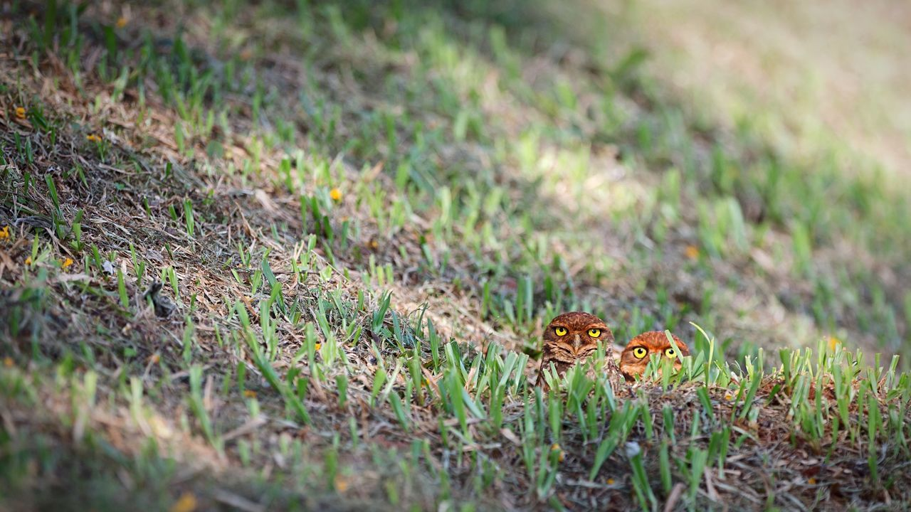 Animal Themes Grass Animals In The Wild One Animal Insect Nature Outdoors No People Plant Day Animal Wildlife Beauty In Nature Growth Close-up Owls Owl Eyes Owl Owl Photography