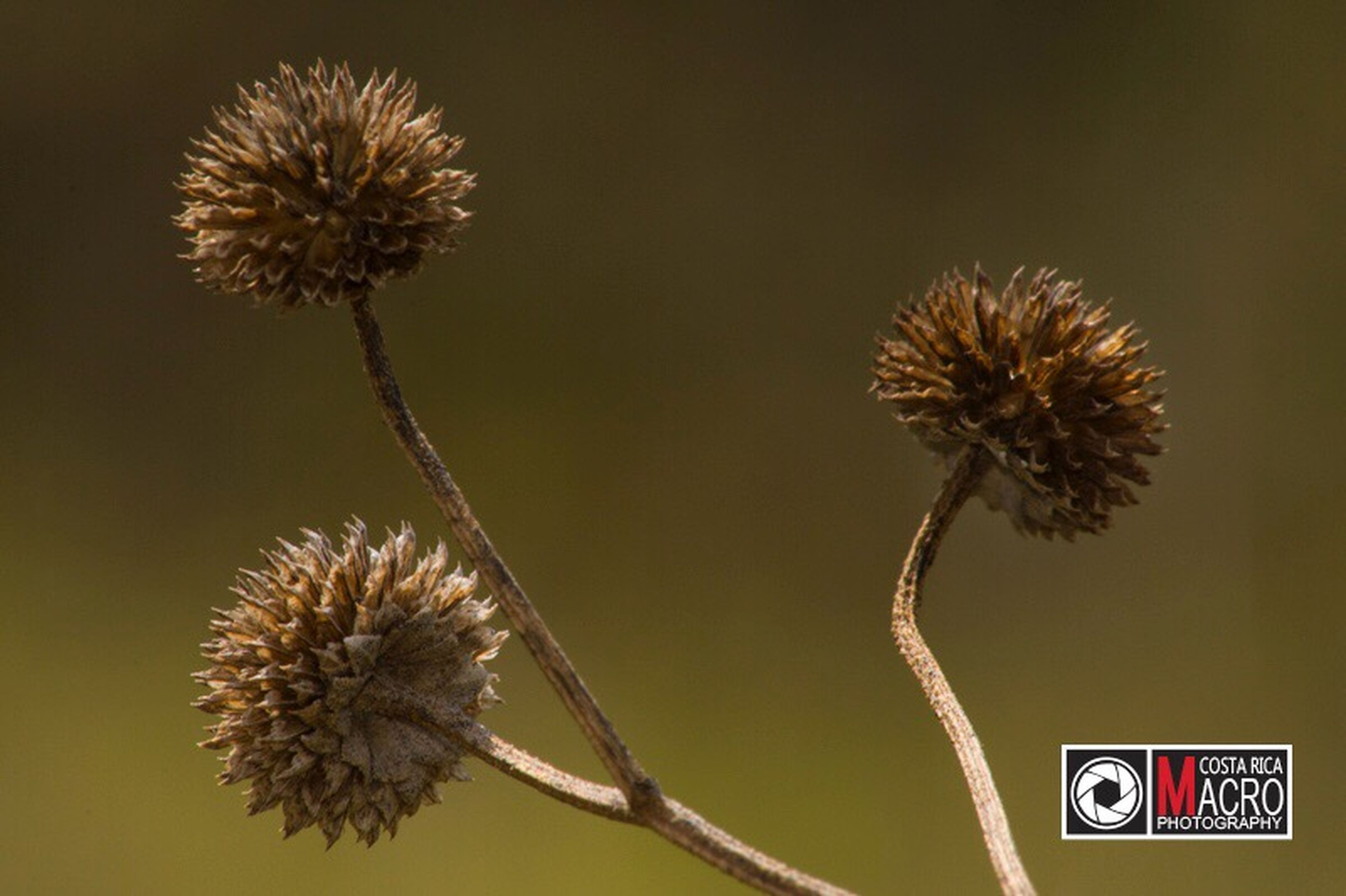 flower, fragility, nature, flower head, growth, focus on foreground, plant, no people, beauty in nature, thistle, close-up, day, outdoors