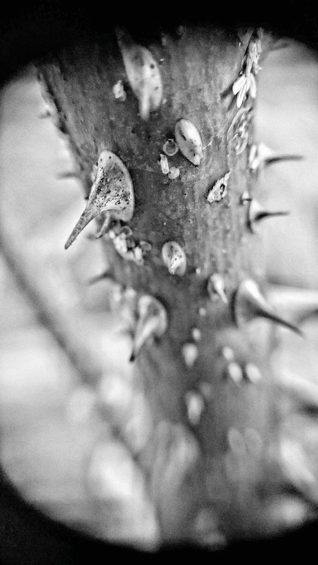 Thorns Instead Of Roses Showcase: February Thorns Sadness Emotion EyeemPhilippines