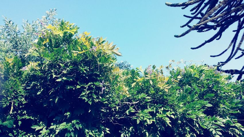 Nature Tree Green Color Blue Day Sky Outdoors Beauty In Nature No People Garden Photography Ascona, Ticino, Switzerland