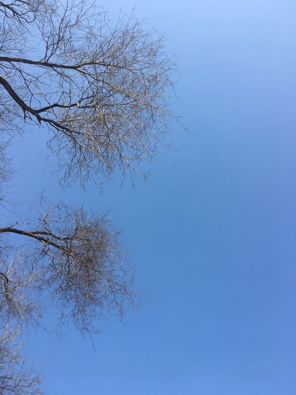 blue sky Clear Sky Blue Low Angle View Tree Nature No People Day Outdoors Beauty In Nature Sky Hugging A Tree Traveling