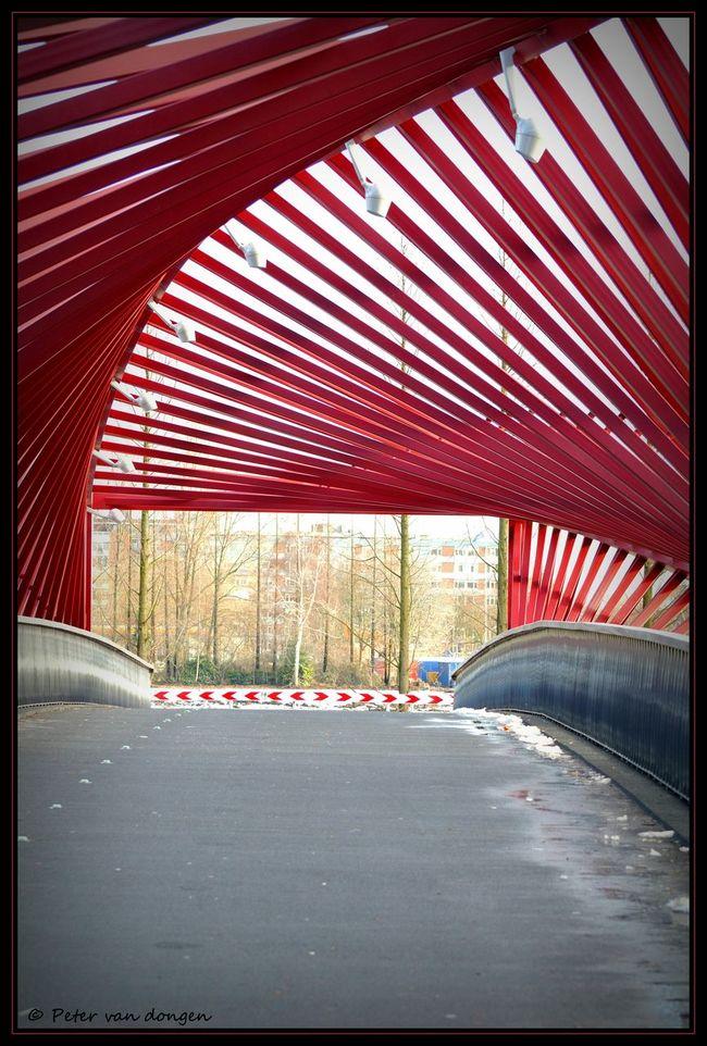 Architecture Vlaardingen Bridge Wokkel Petervdongen Red Road