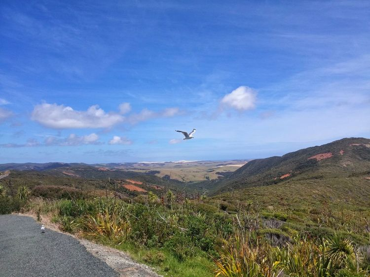 https://youtu.be/4K_XlceYWRk 😁we😄👏🐚👣 Flying Mid-air Cloud - Sky Landscape Cape Reinga New Zealand Respect And Enjoy😍 SH1 New Zealand Mountain Unapologetically Aupouri Peninsula SH 1N Chillaxing Travel Destinations Blue State Highway 1 New Zealand Are We There Yet! Twilight Beach Te Paki Dunes Cape Maria Van Diemen Harakeke My Country Is Beautiful Peach Colored Dunes Te Werahi Beach New Zealand Culture Betterlandscapes
