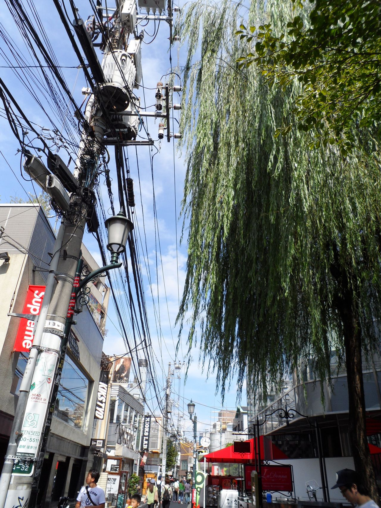 Tree Power Line  City Sky City Life Telephone Line People Cable Sharp Building Exterior 케이블 건물 나무 사진 Photo 풍경 도시 하라주쿠 여행 Trip View Keen 날카롭다 Harajuku Tokyo, Japan