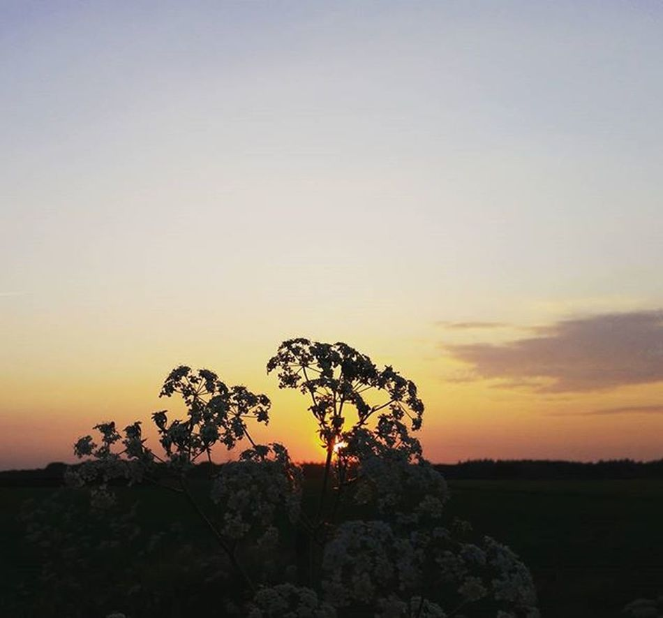 Sunset Zonsondergang Sky_sultans Sunsetporn Skyporn Skypainters Ig_sunsetshots Ig_europe Iglimburg Dutch_connextion Hollandseluchten Ig_sunset Instagood Natuurfotografie Sunset_madness Allwhatsbeautiful Rsa_sunset Arte_of_nature Cloudporn Colorful