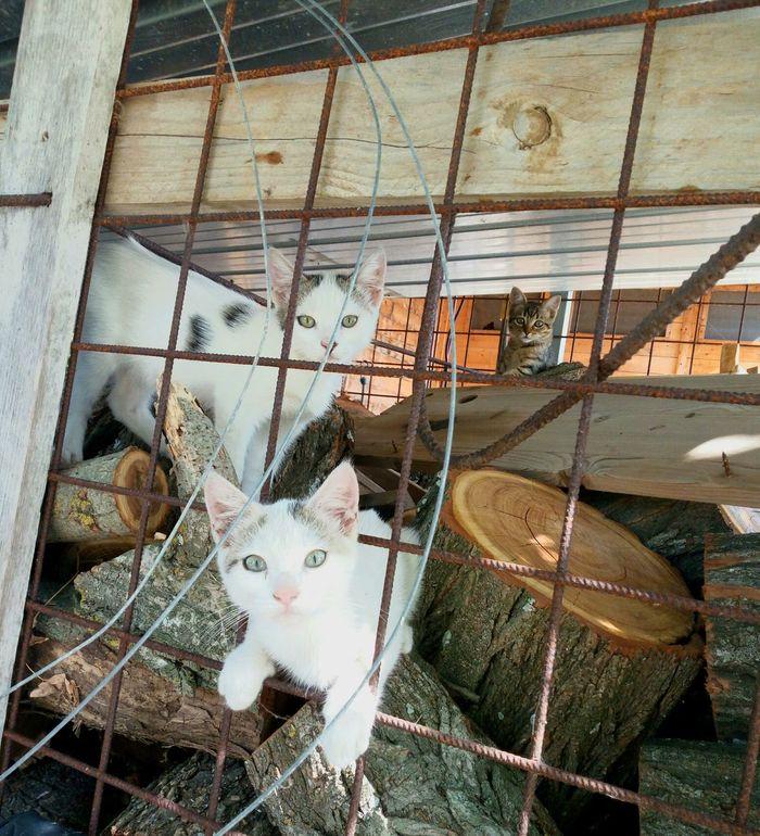 Domestic Animals Pets Domestic Cat Farm Puppy PuppyFace Legnaia Con Gattini Wood - Material Animal Animal Themes