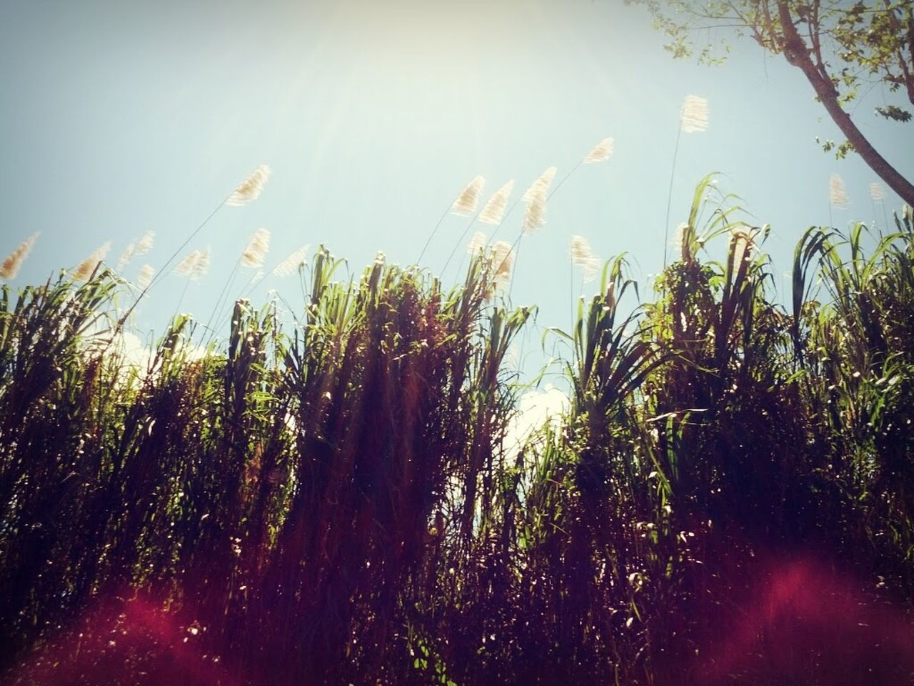 growth, plant, nature, bright, tranquility, sunlight, no people, outdoors, beauty in nature, grass, day, sky