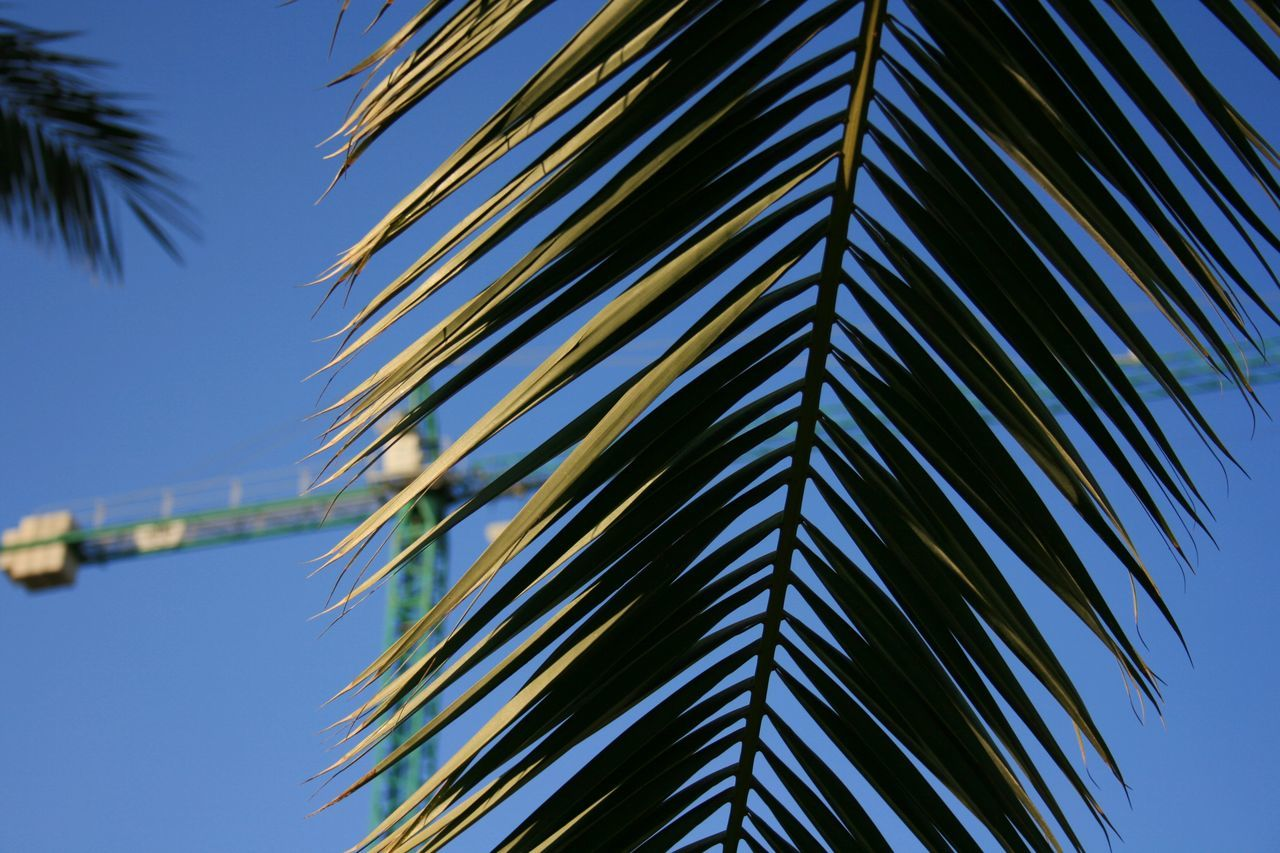Bokeh Bokeh Photography Focus On Foreground Palm Palm Leaves Palm Tree Palm Tree Bokeh Spanish Spring Sunny Spring Day Urban Park Go Green Green Green Color Valencia, Spain Urban Gardening Palmera Close Up Construction Crane Blue Wave The Mix Up