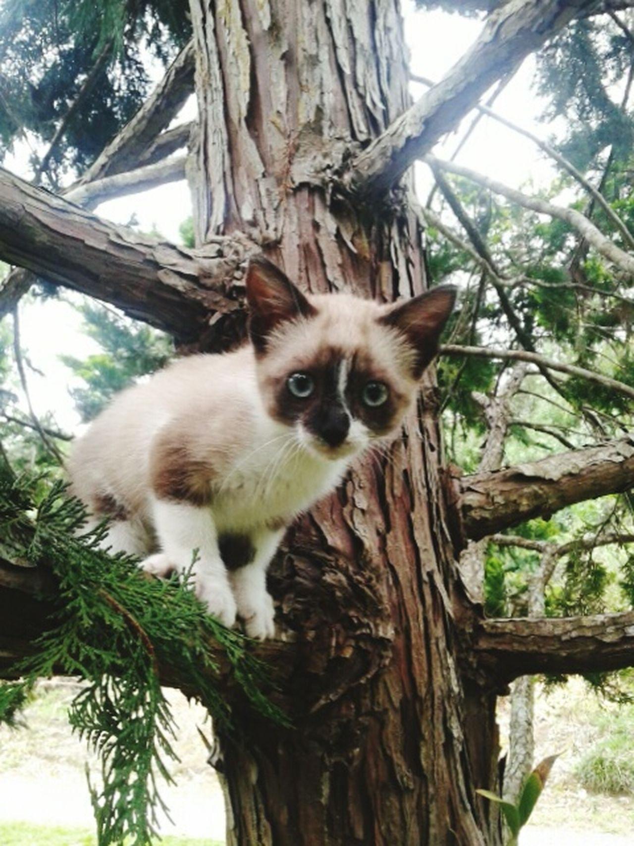 Babycat Treechristmas