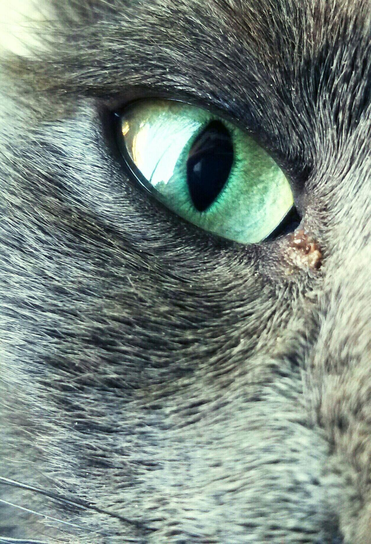 Pets Corner Eye Mycat Alex Mypic Beautiful Eye4photography  ✌️😄