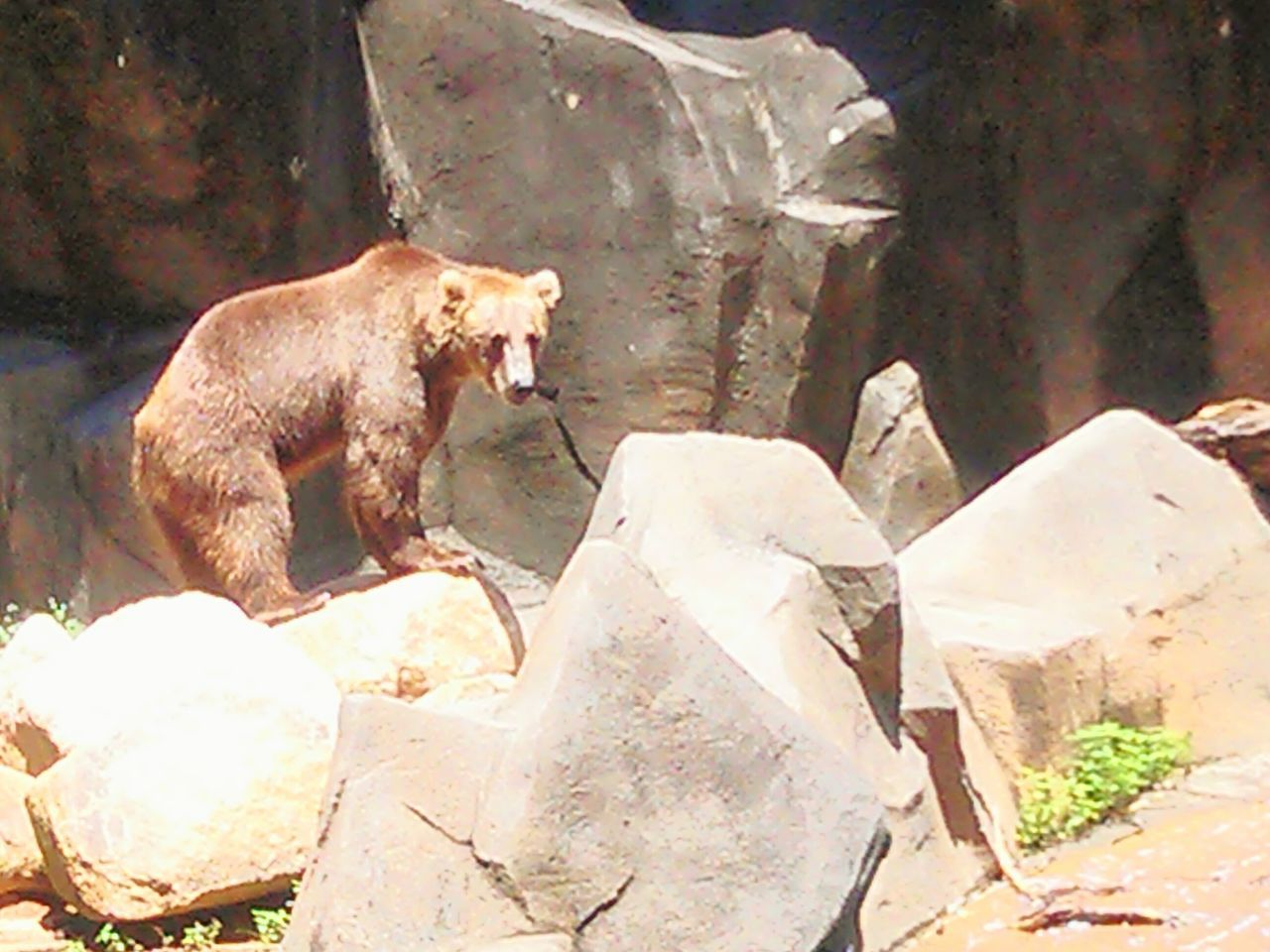 Visiting the zoo. Taking Photos Zoo Zoo Animals  ZooLife Zoophotography ZOO-PHOTO Riverbanks Zoo...columbia, South Carolina Bear