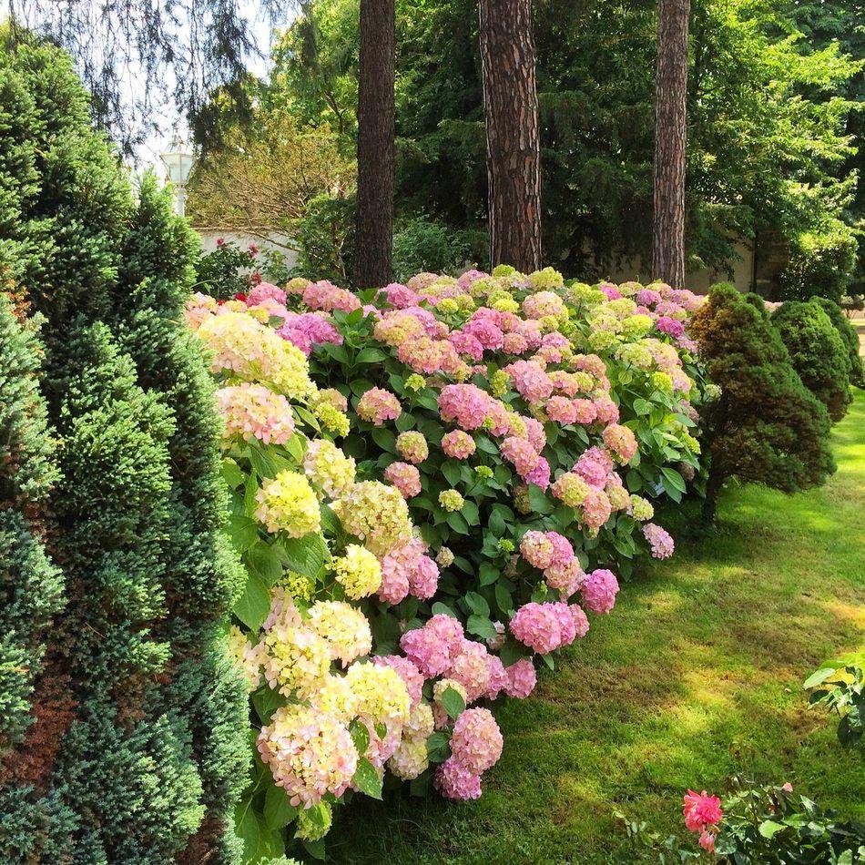 Flowers Nature_collection EyeEm Nature Lover Garden