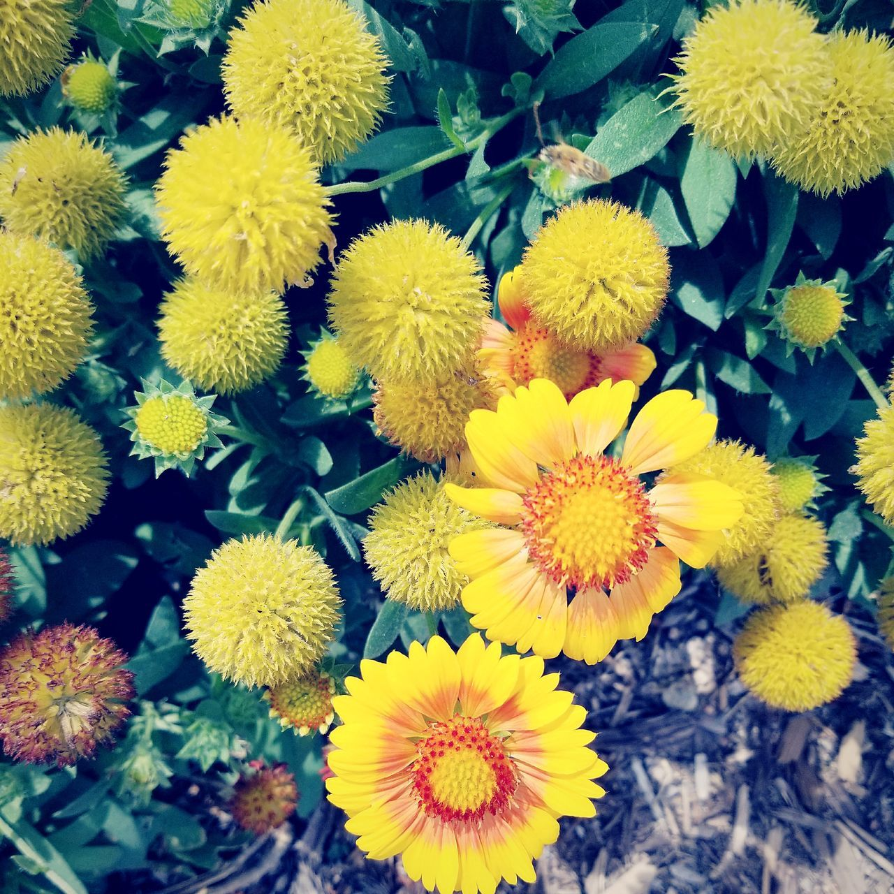 flower, yellow, petal, fragility, beauty in nature, freshness, flower head, nature, growth, plant, no people, high angle view, outdoors, springtime, day, close-up, blooming
