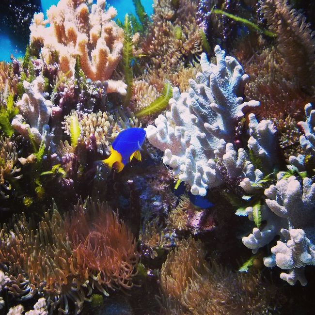 Fish Nature Biosphäre