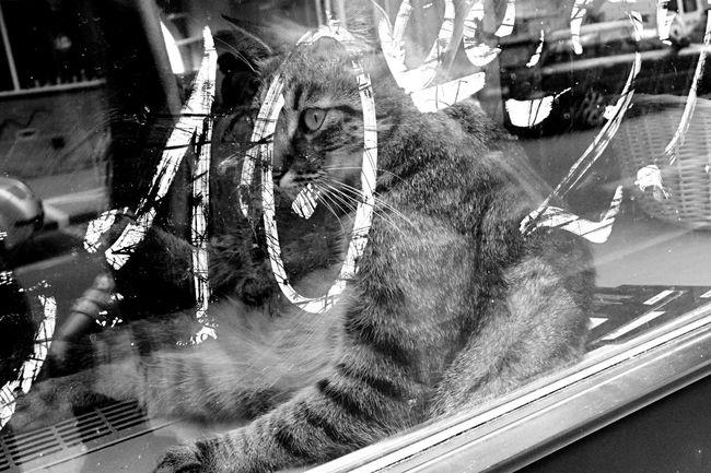 City Life Day Art Artistic Photography No People Photo Black And White Black & White Poland Phoyography Window Cat Animal Grafitti Grafiti Beautiful Relax