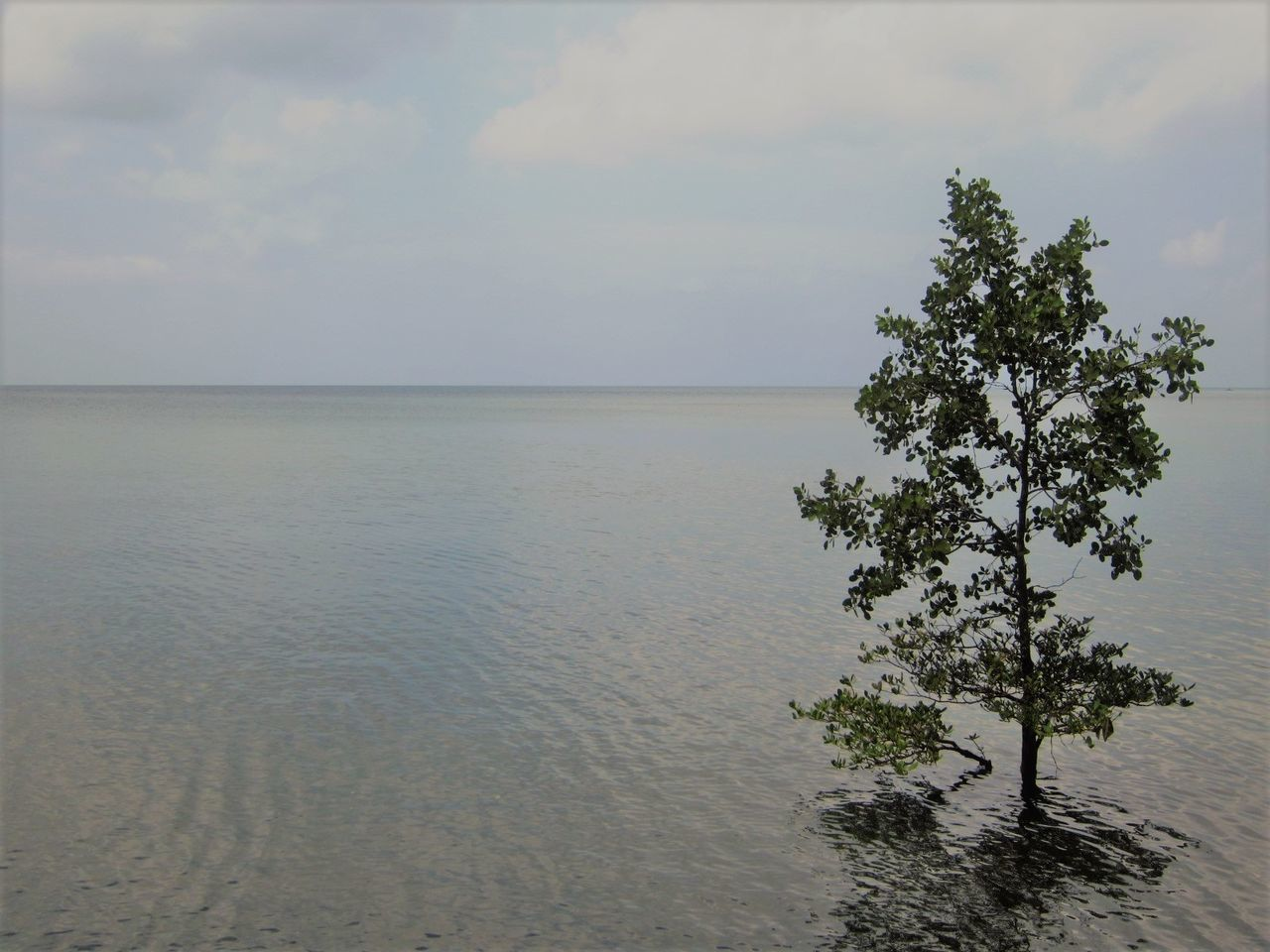 tide coming in Beauty In Nature Calmness Climate Change Horizon Over Water Sea Serenity Tranquility Tree