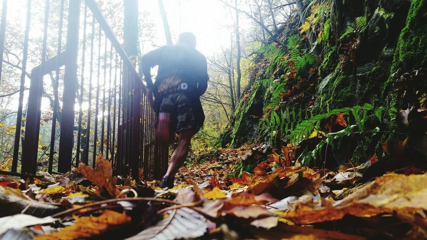 Sports Running Tree Nature Outdoors One Person Beauty In Nature Training Naturelover Autumn Runner Escaped