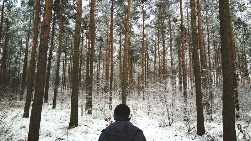 When I was a child I used to walk with my mother to nearest forest to discover misteries of green oasis of peace Forest Winter IPSTrees&Leaves