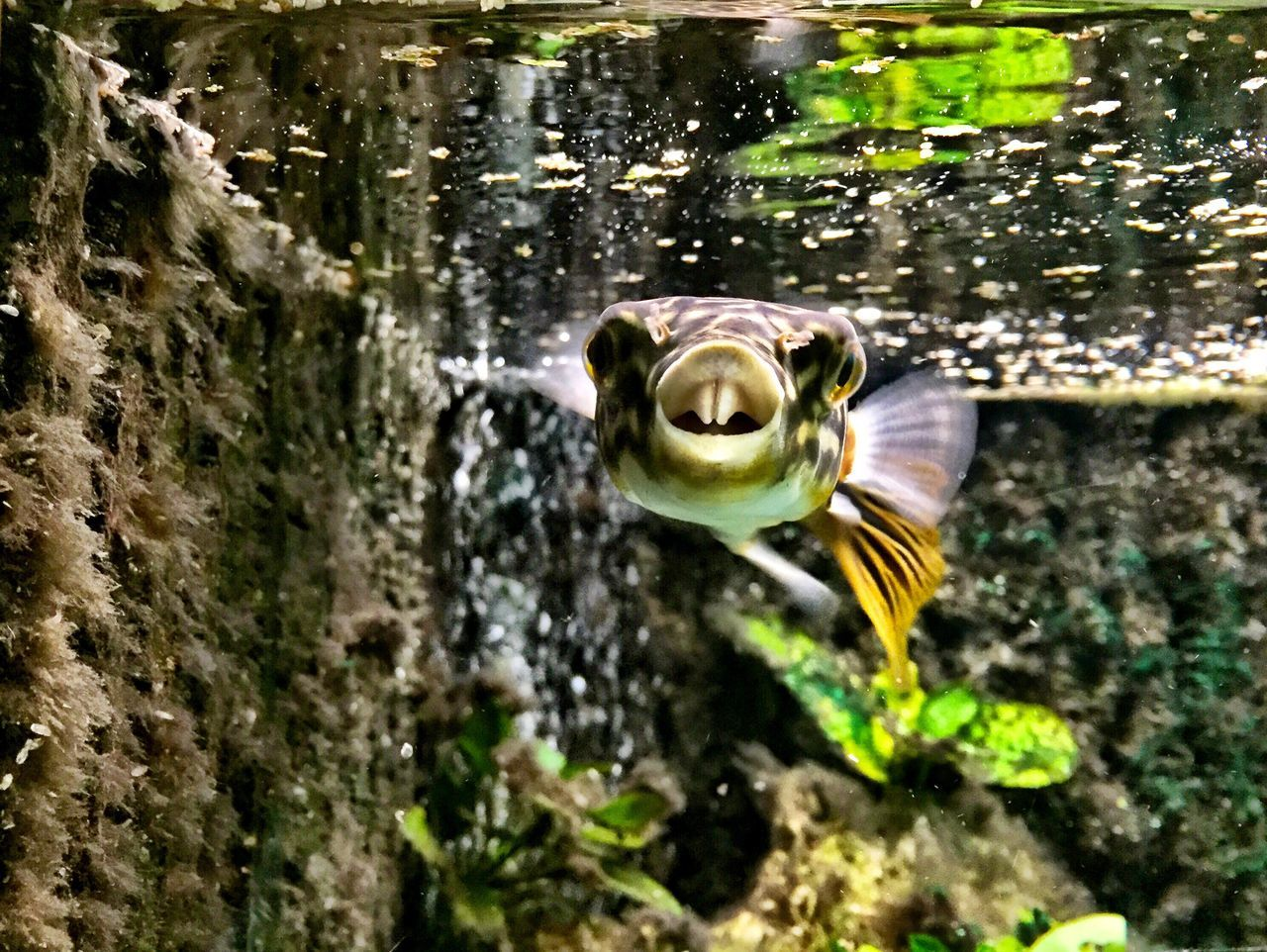 Beautiful stock photos of lustige tiere, Animal Themes, Close-Up, Fish, Nature