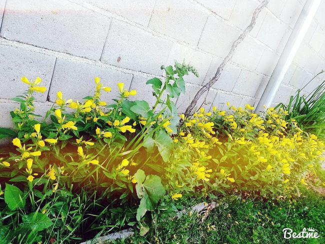 Cicekler Yellow Green