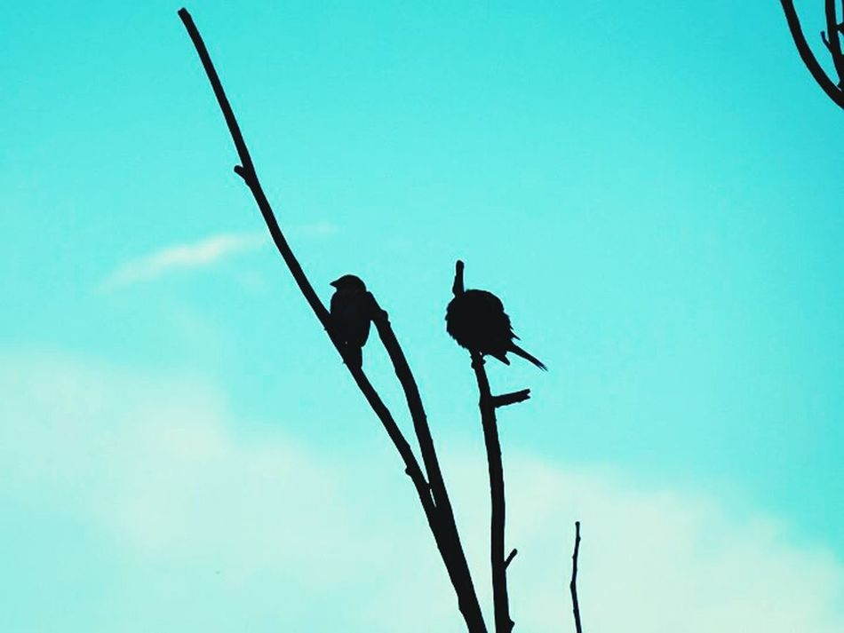 Phoyography Birds Clouds Sky Picture Photo Pictures