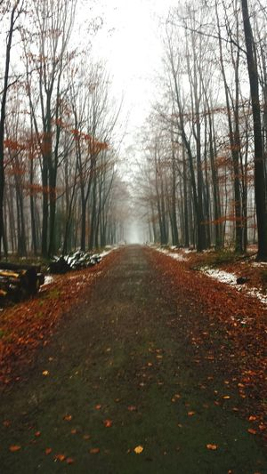 Schnee Fast Weg Wood Trees Bäume Braun Vs Weiss