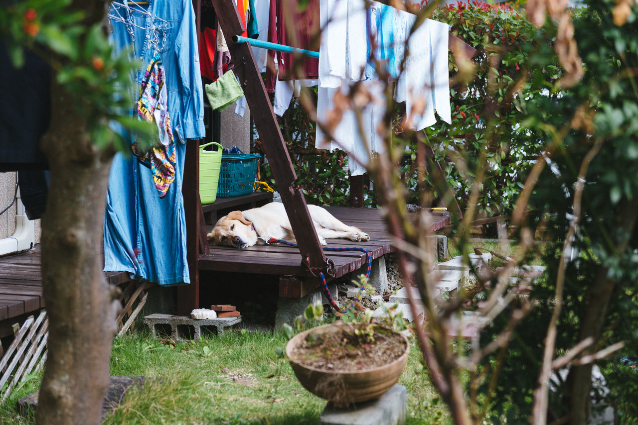 A dogs life? Zzzz Clothesline Day Dog Dogs Life Hanging Holidays Laundry Lazy Nature No People Outdoors Pet Relax Relaxing Siesta Sleeping Tree