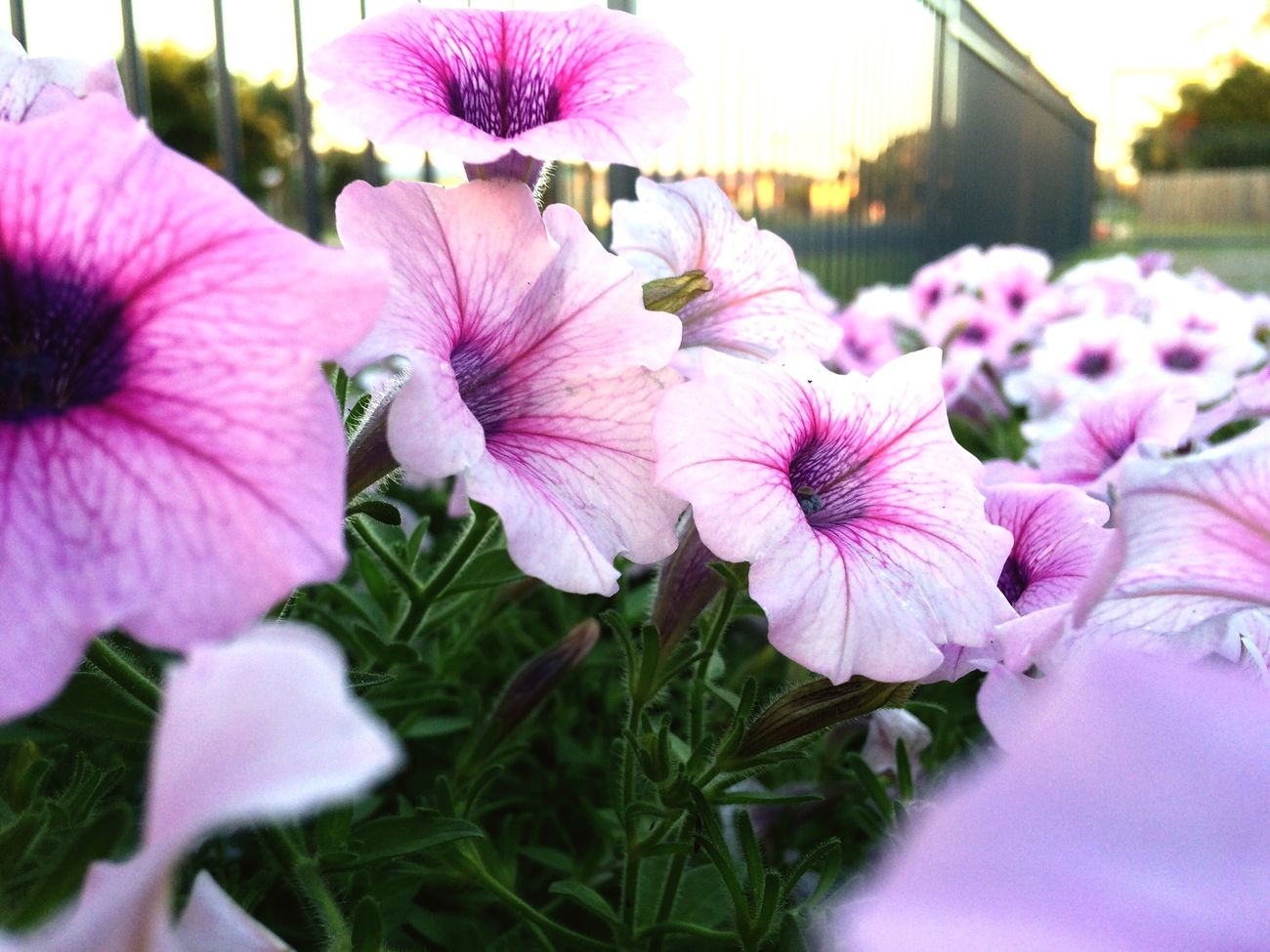 Flowers Likethis