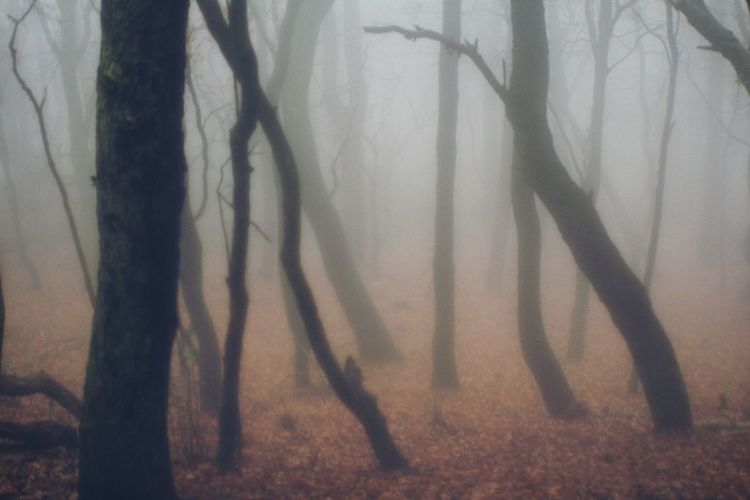Fog And Trees Shadow Nature Fog Forest Sunlight Tree Backgrounds Outdoors No People Day Desaturated