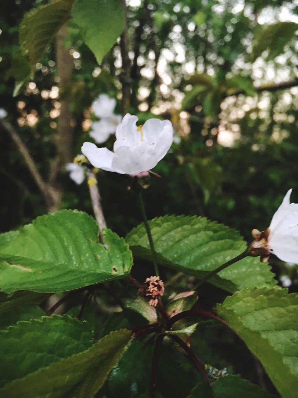 Flower Nature Fragility Freshness Beauty In Nature Growth Petal Close-up Leaf Plant Flower Head Blooming Day Green Color Outdoors Water