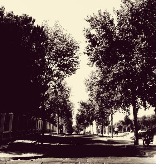 Tree Nature Day Sky No People Outdoors Clear Sky Plao Laferia Tranquilidad Tiempo Pilas-sevilla First Eyeem Photo