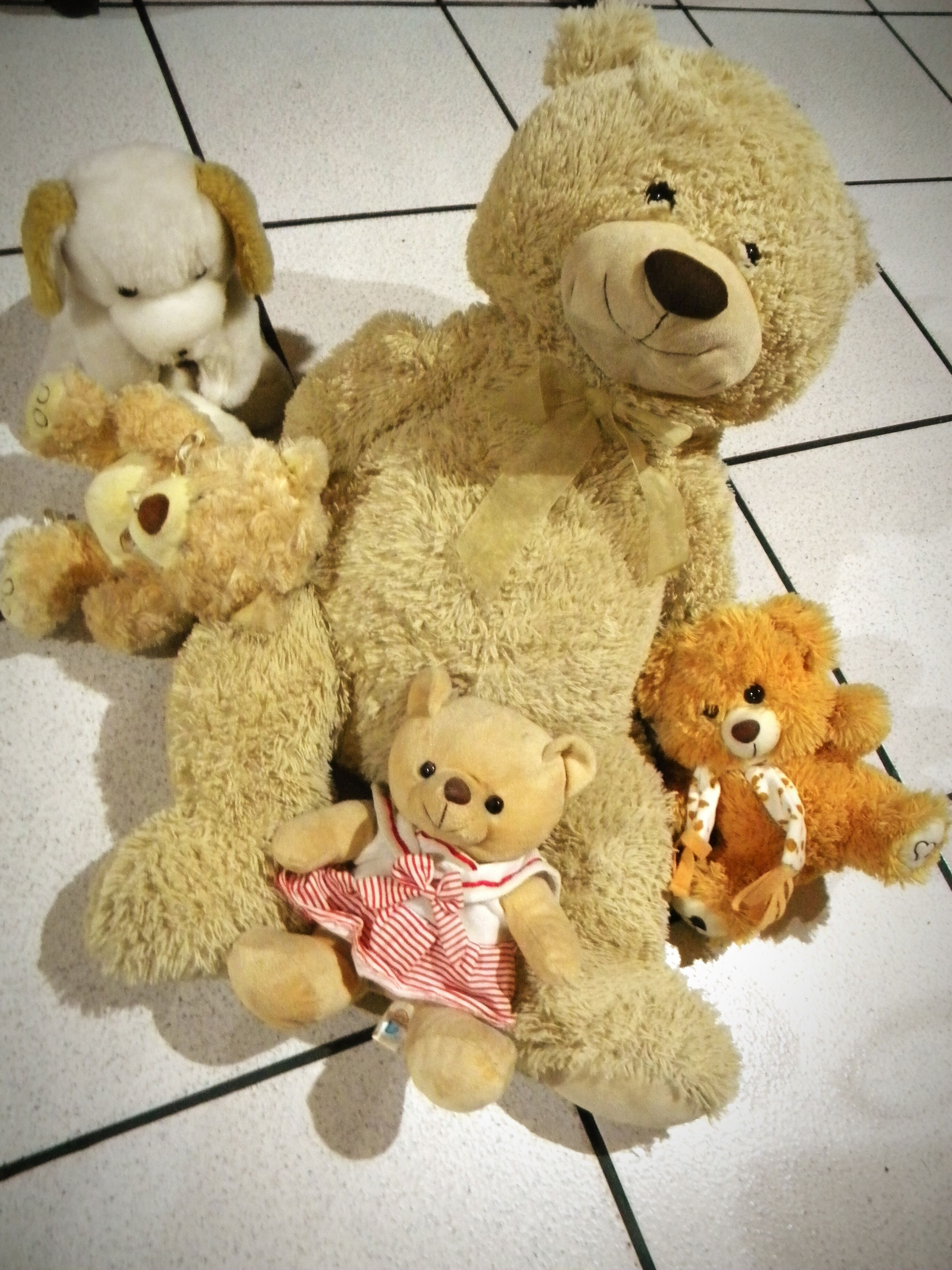 stuffed toy, toy, teddy bear, indoors, no people, childhood, doll, animal representation, close-up, hanging, stuffed, representing, day