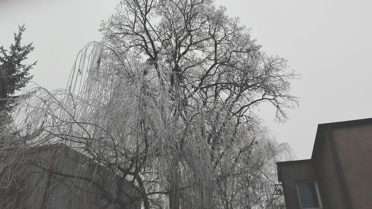 Frosted Glass Beauty In Nature Day Snow No People Nature Winter Tree Nature Sky Cold Temperature